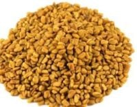 Eat Me: Boosts libido, relieves menstrual pain… why fenugreek is good for you