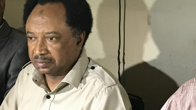 Shehu Sani kicks as Kaduna APC adopts indirect primary