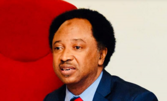 Shehu Sani: Some govt officials condemn hate speech but sponsor attacks on their opponents