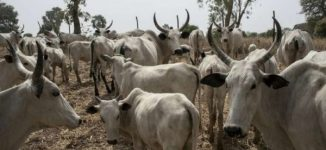 Abuja farmer killed 4 of my cows, herder tells court