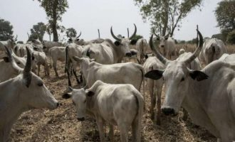 Every state deserves Ruga, says Miyetti Allah leader