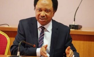 Let El-Zakzaky's doctors treat him to avoid blame, Shehu Sani tells FG