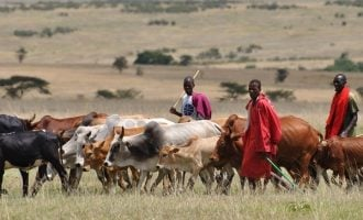 Northern coalition gives governors 30-day ultimatum to adopt Ruga