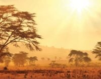 Extreme heatwave to hit one-third of African urban population, experts warn