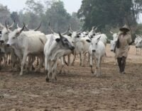 Miyetti Allah bans herdsmen without family in south-east from grazing in the region