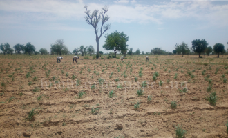 A Chinese billionaire and a tale of land grab in northern Nigeria
