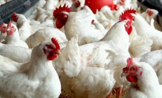 CBN: Nigeria's poultry industry now worth N1.6trn