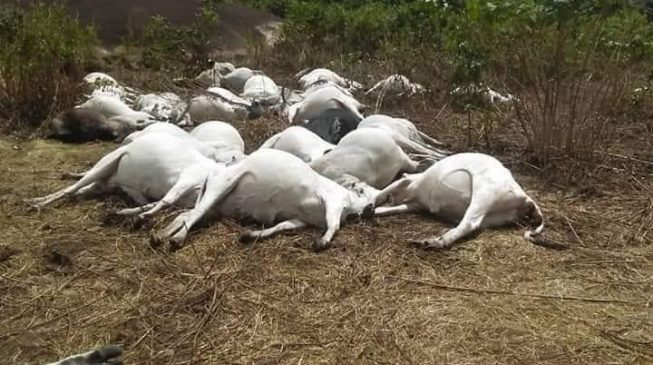 EXTRA: Lightning kills 36 cows on Ondo 'sacred mountain'