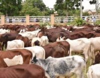 Ranching: PDP warns Fayemi against using govt funds for private businesses