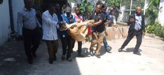 Lion found at VI apartment moved to Lekki zoo