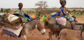 Bauchi community 'takes pregnant women to the hospital on donkeys'