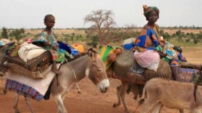 Bauchi community 'takes pregnant women to the hospital on donkeys'