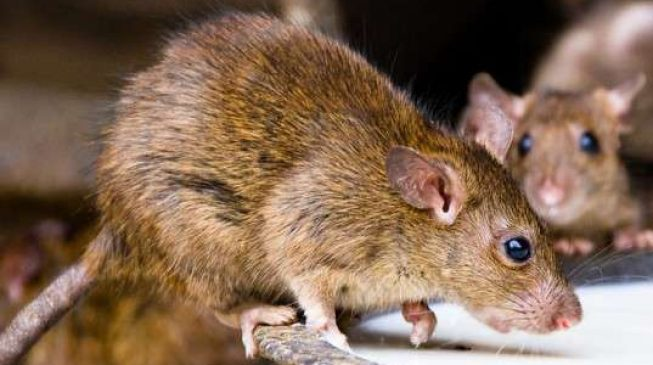 Three killed, 292 on watch list as Lassa fever hits Kano (updated)