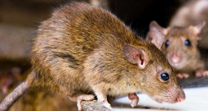 Another fever with Lassa fever