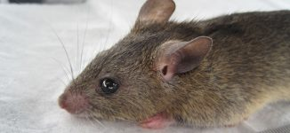 Image result for Lassa fever: 63 placed under surveillance in Lagos
