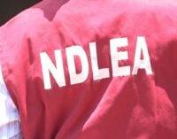 NDLEA arrests Bauchi varsity student for 'drug trafficking'