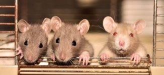 How it spreads, symptoms, treatment… all you should know about hantavirus