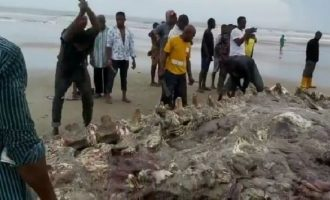 Concern mounts as Rivers community feasts on dead whale