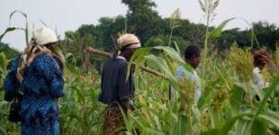 Environmentalist to farmers: Adopt climate-smart practices to guarantee food security