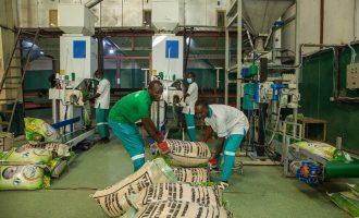 Kano unseals Tiamin rice company