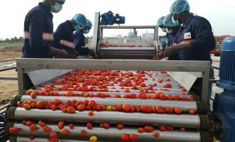 GBfoods completes N20bn tomato processing factory in Kebbi
