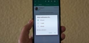 WhatsApp allows users to mute chats forever