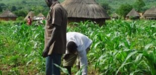 NiMet partners FAO to provide weather information for improved farming