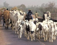 Fulani herders have right to do business anywhere in Nigeria