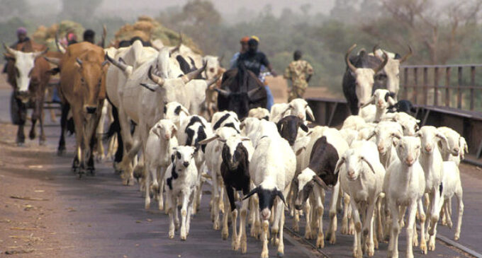 Falana to FG: ECOWAS protocol allows you to shut out foreign armed herders