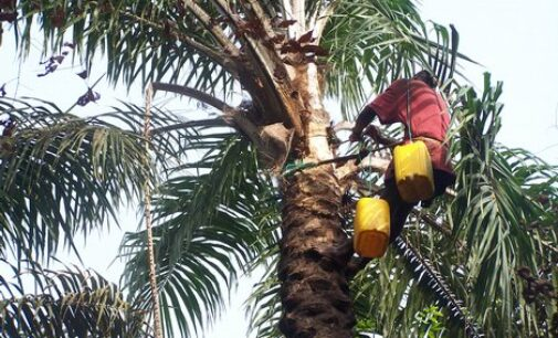 Police rescue abducted palmwine tapper in Oyo