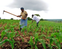 CBN: 3.8m farmers have benefitted from Anchor Borrowers' Programme