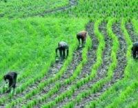 Ekiti gives farmers, herders two weeks to register or get expelled