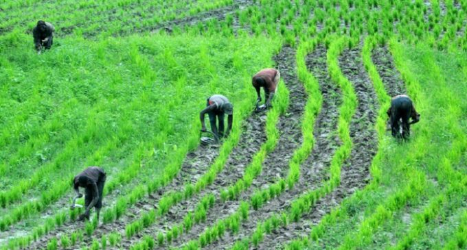 Climate change: Farmers asked to plant improved seeds over low rainfall