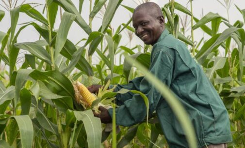 Nestle engages 5,000 farmers to supply raw materials