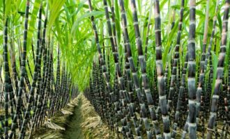 Flour Mills expands Sunti sugar estates to 22,000 hectares with new acquisition