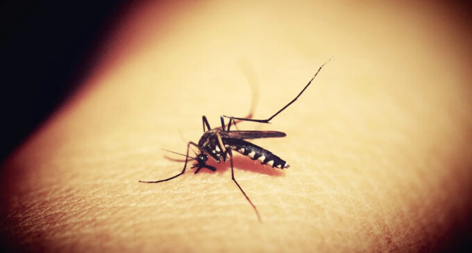 BREAKTHROUGH: Oxford vaccine shows 77% efficacy for malaria treatment