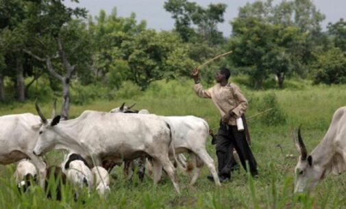 AT A GLANCE: Edo, Imo, C'River — six southern states yet to enact anti-open grazing bill