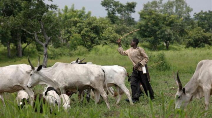 AT A GLANCE: Edo, Imo, C'River -- six southern states yet to enact anti-open grazing bill