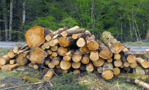 Foreigners engage in illegal tree felling in 16 states, activists raise the alarm