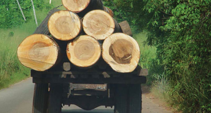 Climate Watch: Nigeria commits to forest protection, and CSO warns of tree felling