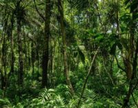 Environmental group petitions FG to protect Cross River's rainforests