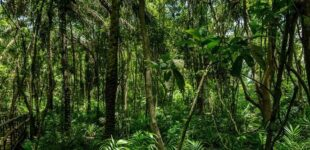Nigeria failing in its obligation on forest preservation, says rights group