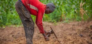 Climate Watch: Low rainfall hurting farmers in northern Nigeria