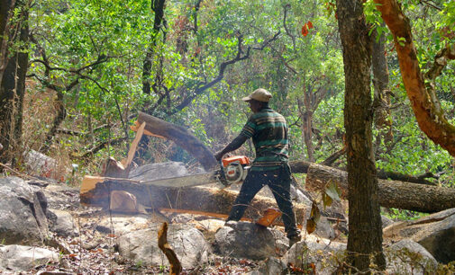 Less food and medicine: How logging is hurting Nigeria's indigenous people
