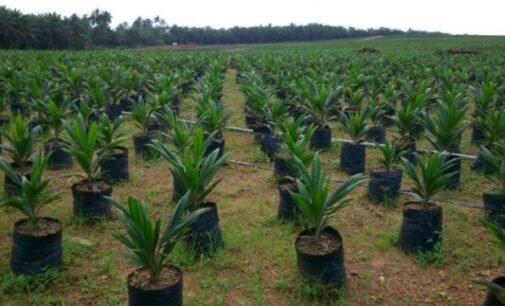 INSIGHT: How Nigeria can fight climate change through nature-based solutions